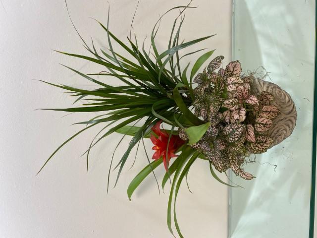 Plants Arrangement Pot