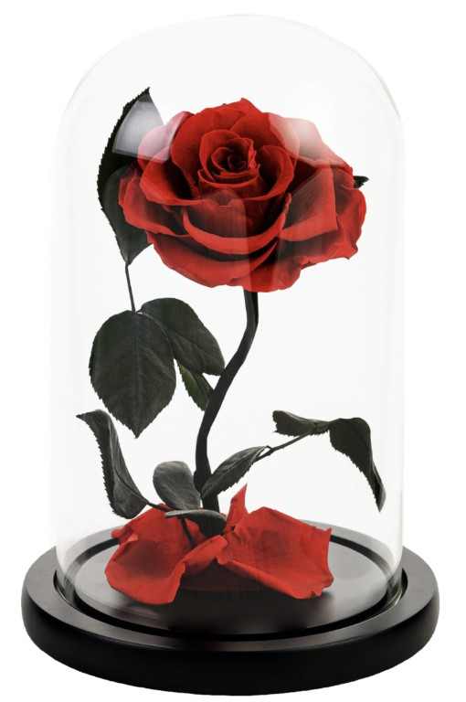 Red Forever Rose Dome