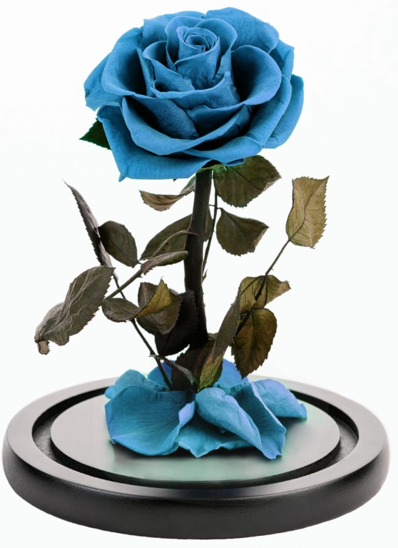 Turquoise  Forever Rose Dome