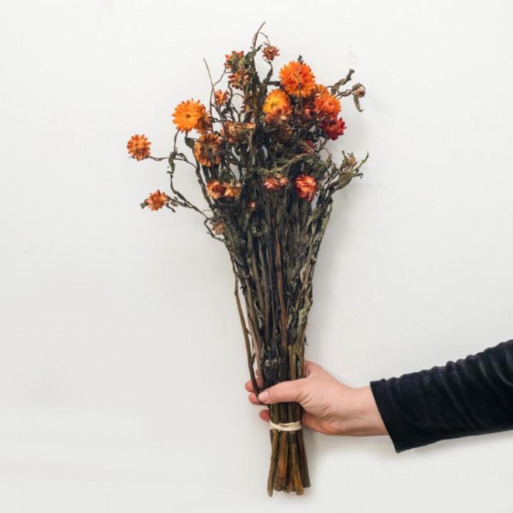 Helichrysum Bunch
