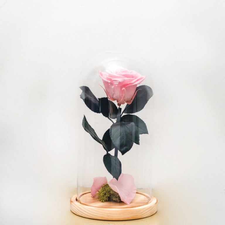 Pink Forever Rose Dome
