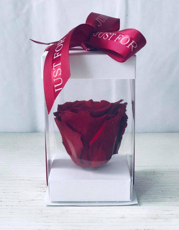 Single Red Forever Rose