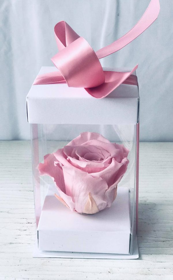 Single Pink Forever Rose