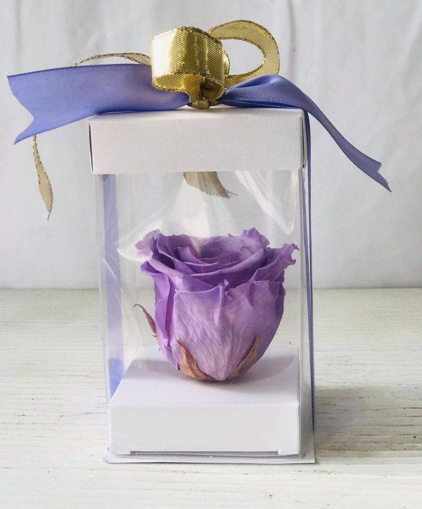 Single Lavender Forever Rose