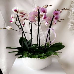 Bliss White & Purple Orchids