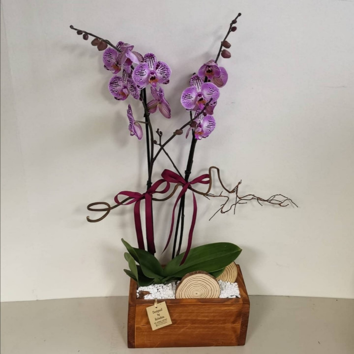 Double Orchid in a Wooden Pot