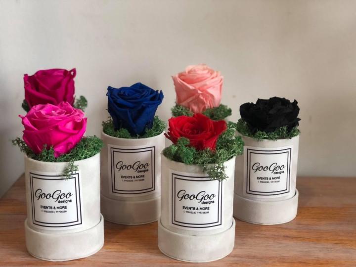 Single rose in mini box - Blue