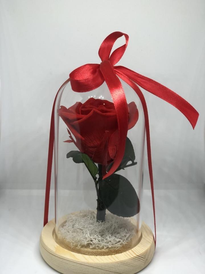Forever Red rose - 15.5 x 9.5cm