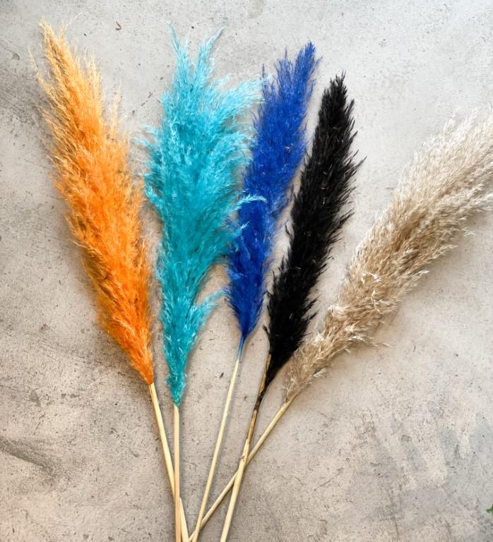 Pampas grass - Blue