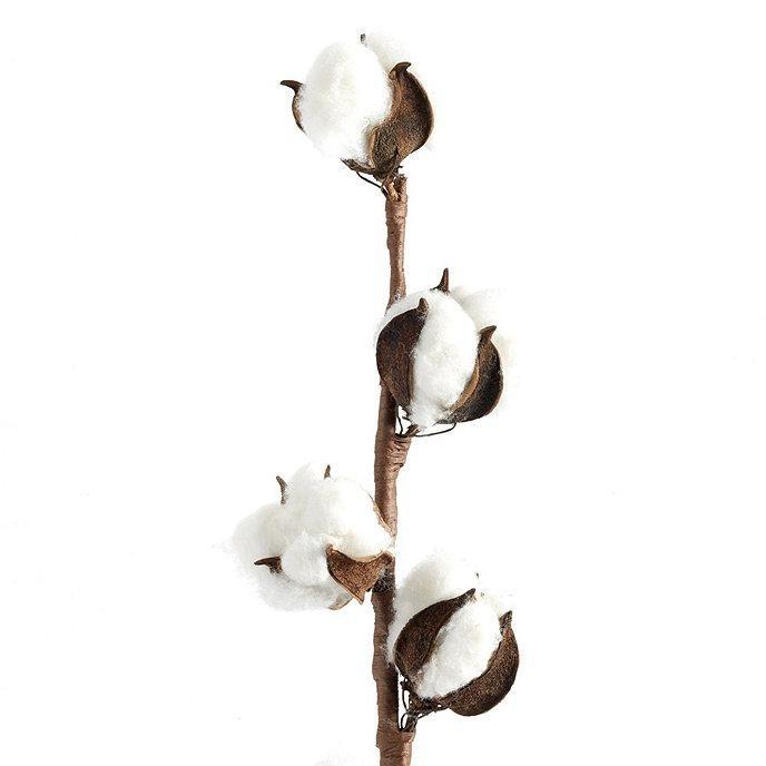 Stem of cotton