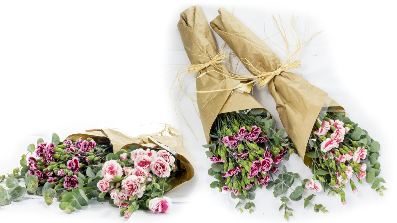 Dianthus caryophyllus hand-tied bouquet