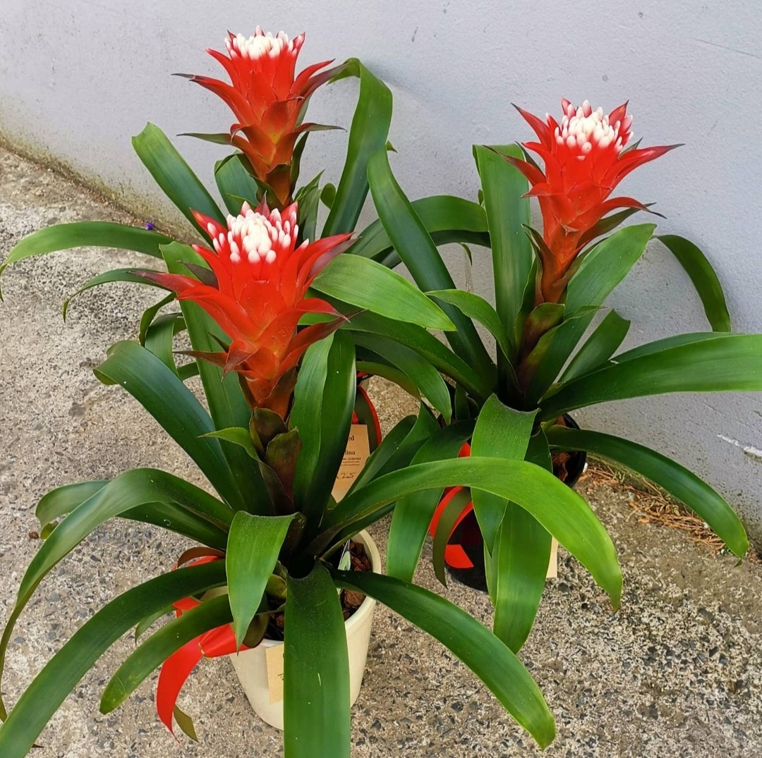 Sustainable Indoor Red Plant