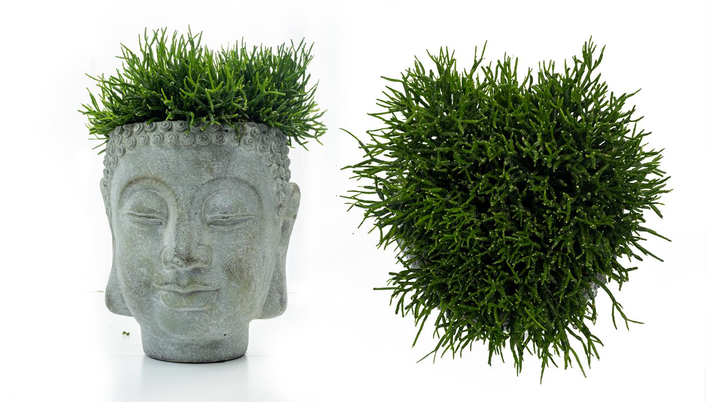 buddha head4