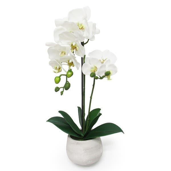 White Orchid In A Clay Jar