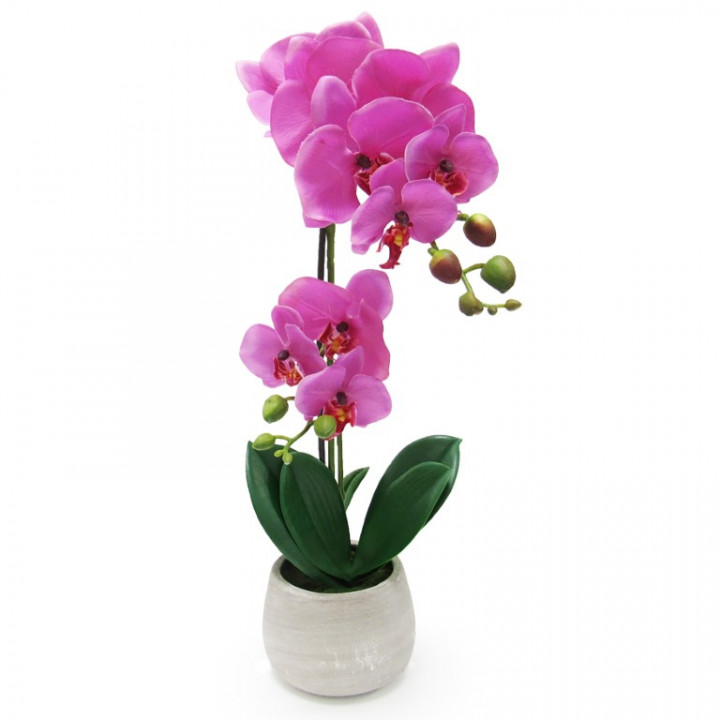 Rose Orchid In A Clay Jar