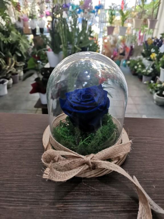 Royal Blue Forever Rose In A Jar
