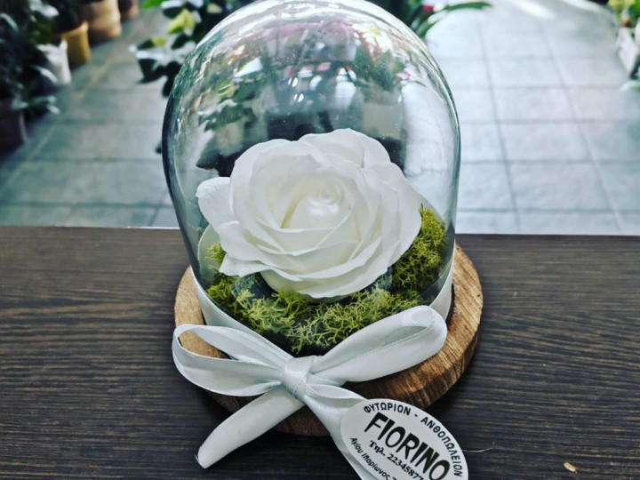 White Forever Rose In A Jar