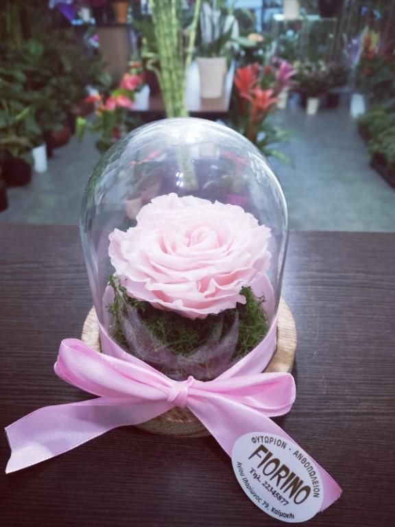 Pink Forever Rose In A Jar