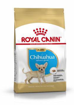 Chihuahua Puppy 1.5Kg