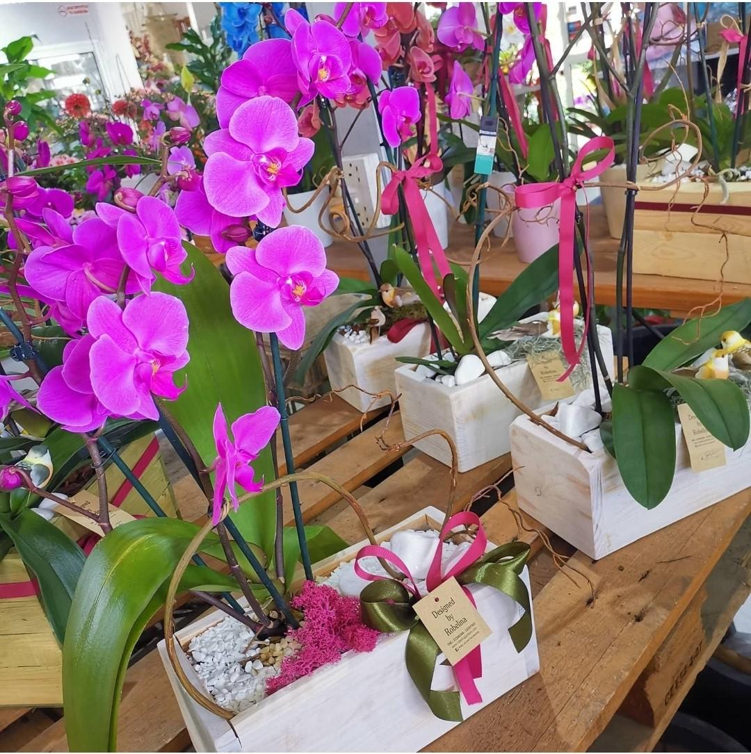Orchid in a Big Wood Pot