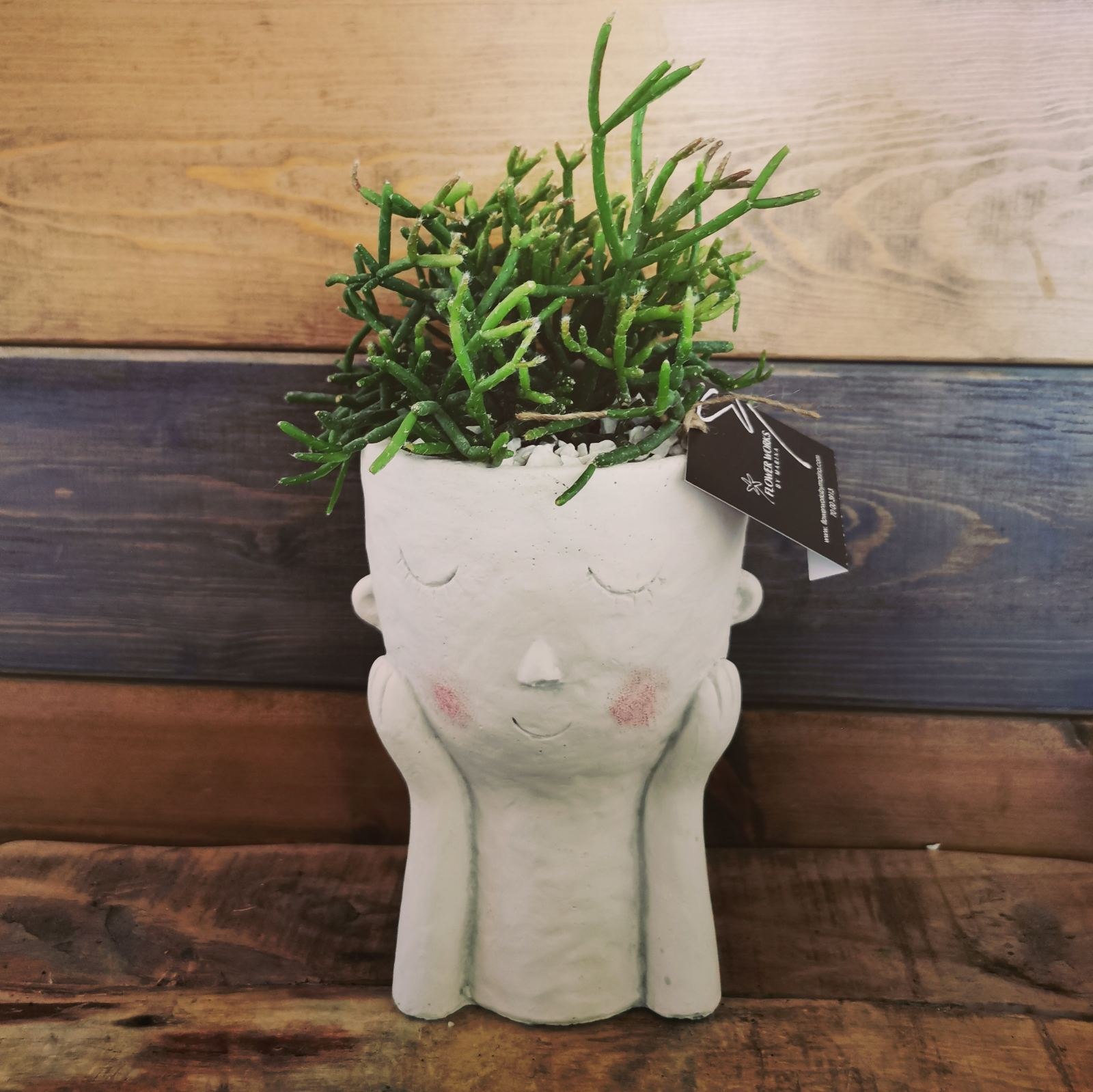 FACE POT WITH RHIPSALIS  PLANT