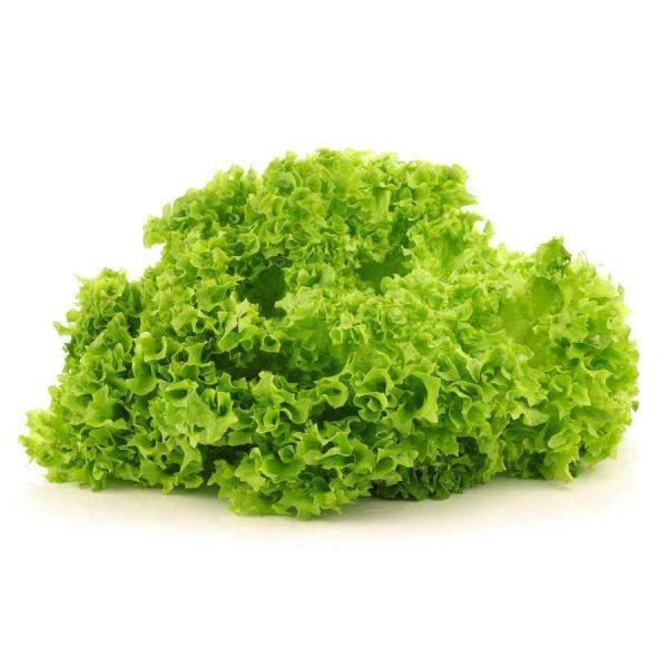 Lettuce Lollo Bionda Piece