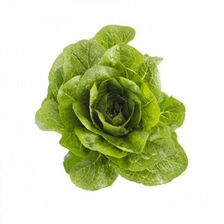 Lettuce Piece