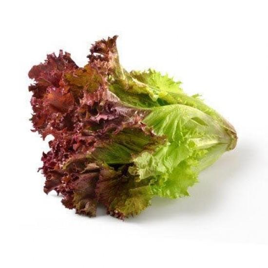Lettuce Lollo Rosso Piece
