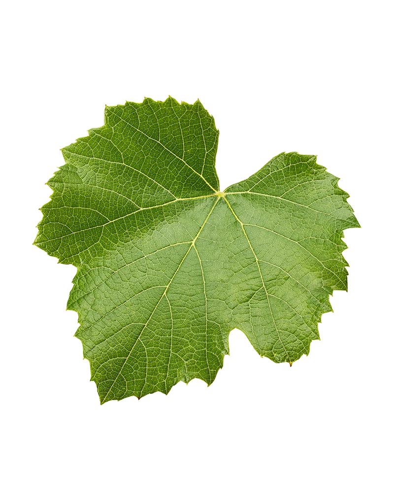 Vine Leaves Fresh 130g