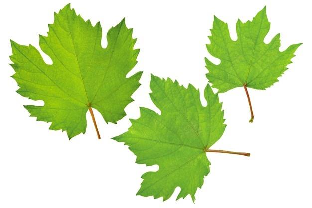 Vine Leaves Frozen 130g